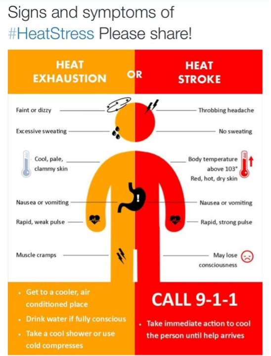 infographic of the signs and symptoms of heat stress. please feel free to share.